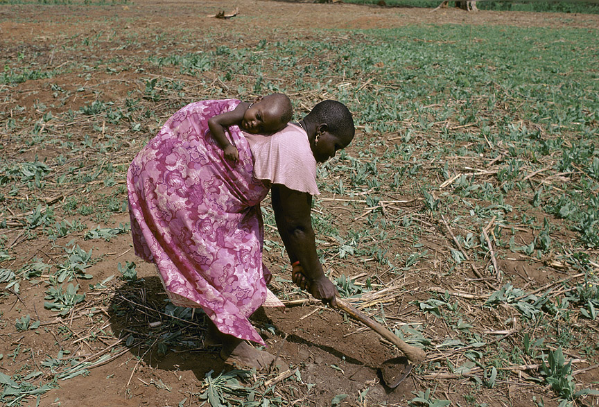 Agriculture in Benin